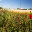 Landscape of field — Stockfoto