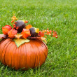 Decorative pumpkin on green grass - Stock Photo