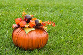 Decorative pumpkin on green grass — Stock Photo