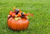 Decorative pumpkin on green grass — Stock Photo