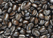 Coffeebean — Stock Photo
