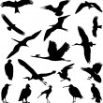 Birds — Stock Vector #2715380