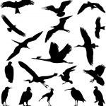 Birds — Stock Vector