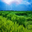 Storm over wheat field — Stock Photo #2803578