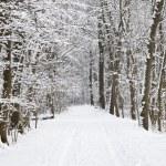 Winter lake landscape — Stock Photo