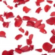 Royalty-Free Stock Photo: Falling rose petals