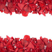 Falling rose petals — Stock Photo