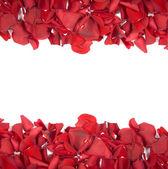 Spadające płatki róż — Zdjęcie stockowe