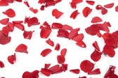 Caída de pétalos de rosa — Foto de Stock