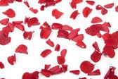 バラの花びらを落ちる — ストック写真
