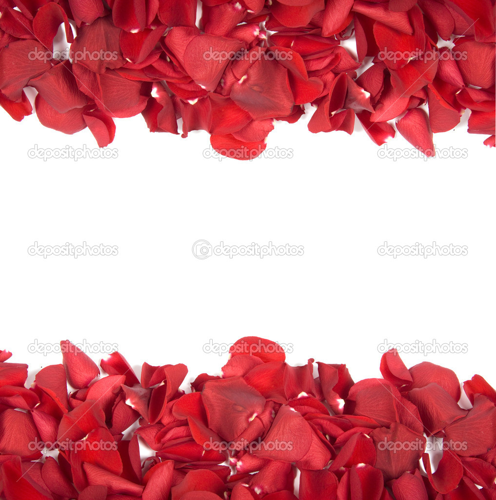 Falling rose petals on white background — Stock Photo #2808010