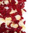 падающие лепестки роз — Стоковое фото