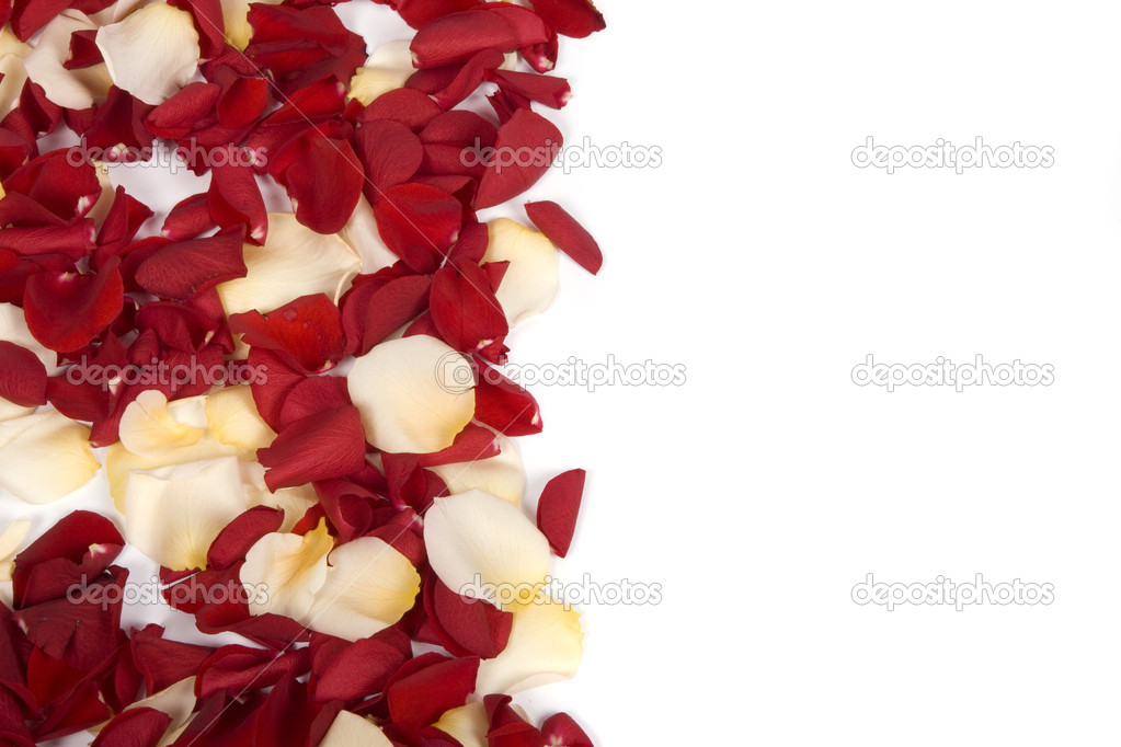 Falling rose petals on white background — Stock Photo #2811338