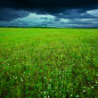 Green field in summer — Stock Photo #2910608