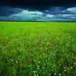 Green field in summer — Stock Photo
