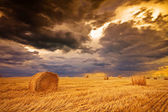 Field with hay bale — Stock Photo