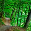 Green forest — Foto de stock #2929291