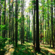 Green forest — Stock Photo #2929830