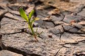Paysage avec terre fissurée — Photo
