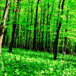 Wild garlic forest — Stock Photo #3111186