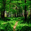 Wild garlic forest — Stock Photo #3111213