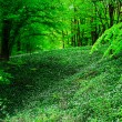Wild garlic forest — Foto Stock