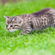 Little kitten playing on the grass — Stock Photo #3204933