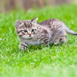 Little kitten playing on the grass — Stock Photo #3204937