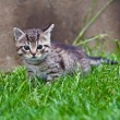 Little kitten playing on the grass — Stock Photo #3205055