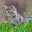 Little kitten playing on the grass — Stock Photo