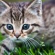 Little kitten playing on the grass — Stock Photo #3205159