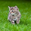 Little kitten playing on the grass — Stock Photo #3205317
