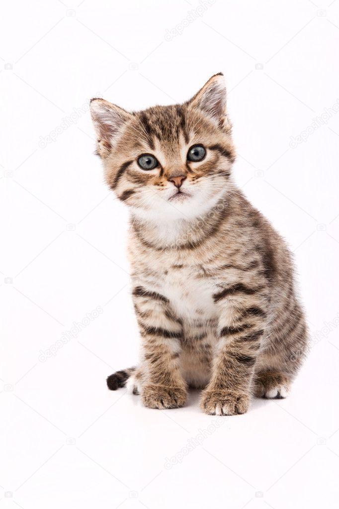 кошки на белом фоне