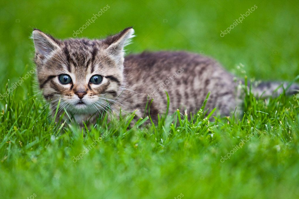 Little kitten playing on the grass  — Stock Photo #3205207