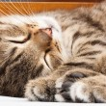 Sleeping cat — Stock Photo #3385663