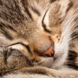 Sleeping cat — Stock Photo