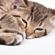 Sleeping cat — Foto Stock