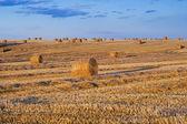 Rolnicy pola pełne bele siana — Zdjęcie stockowe