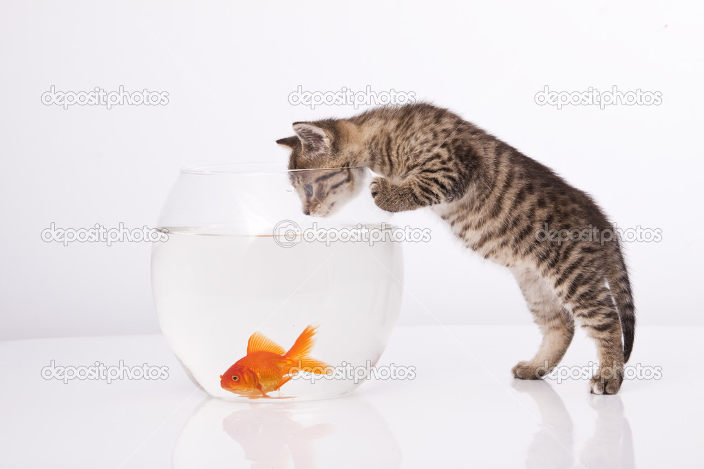 Home cat and a gold fish  — Stock Photo #3389765