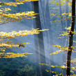 Stock fotografie: Lights of the autumn forest