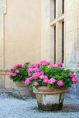 Hydrangea pots — Stock Photo