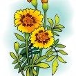 Tagetes - Stock Vector