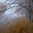 Oak grove in fog — Stock Photo