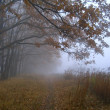 Autumn Fog — Stock Photo #2771015