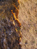 Fire separating field — Stock Photo