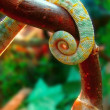 Foto Stock: Tail chameleon