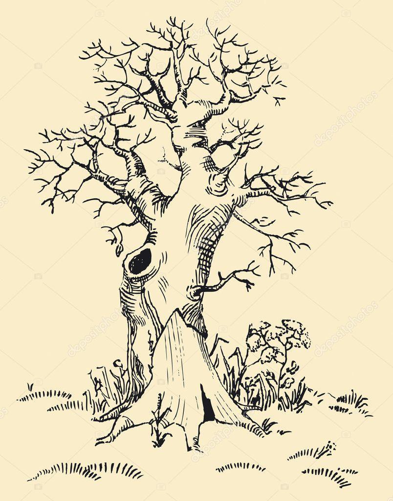 Мудрое дерево рисунки карандашом 8