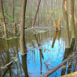 ������, ������: Flooding in the woods