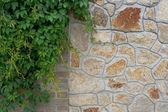 Brick walls with plant — Stock Photo