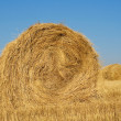 Haystacks in field — Stock Photo